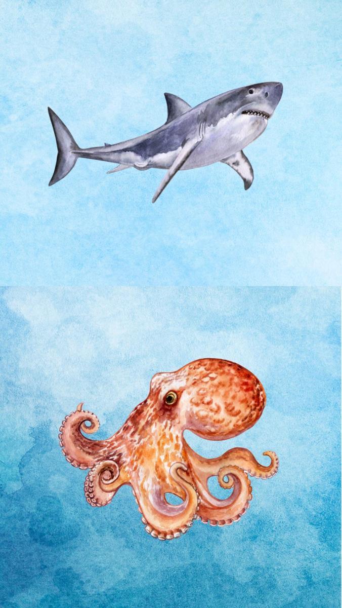 Hai & Octopus